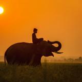 カンボジア-ゾウ